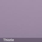 Plain Gum Thistle